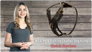 Leather Dog Harness for Daily Walks and Professional Training - Review