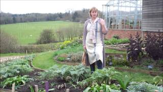 Planting artichokes with alliums