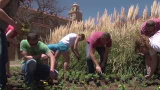 Planting Tradition: Texas Tech Celebrates Arbor Day