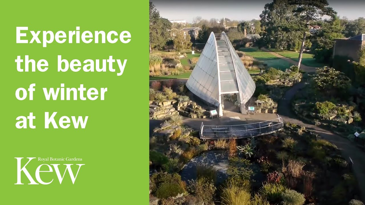 Experience the beauty of winter at kew gardens youtube for Garden trees b q