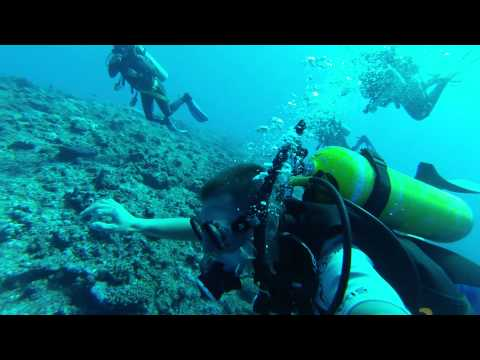 DIVING ˈEUA, KINGDOM OF TONGA 2014 [HD 1080p]