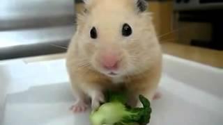Домашние животные.Видео