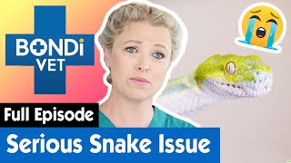 🐍 Green Tree Python Hides a Sinister Internal Problem | S09E05 | Bondi Vet (Coast To Coast)