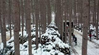 DUTCHMAN TREE FARMS | LOADING 160 SEMI'S