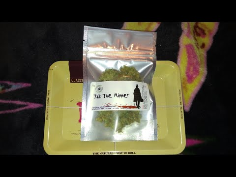 JACK THE RIPPER - OFFICIAL STRAIN REVIEW CANNABIS LEAFLY (Jack's Cleaner x Space Queen)