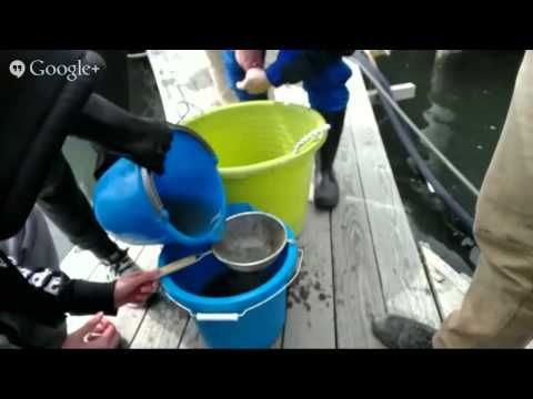 Hangout with the NY Aquarium American Eel Project