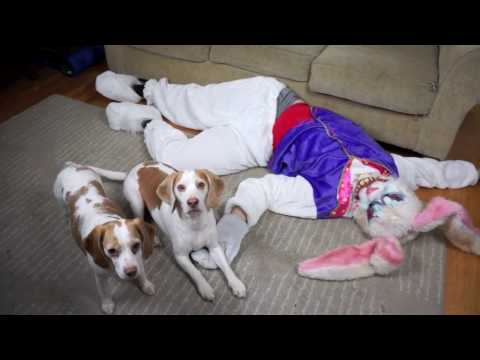 Dogs vs. Evil Bunny Prank Gone Wrong! Funny Dogs Maymo & Penny