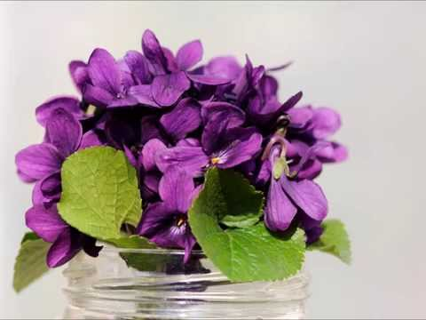 l 39 amour est un bouquet de violettes par em le b cheron lopez youtube. Black Bedroom Furniture Sets. Home Design Ideas