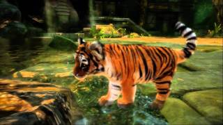 Official: Kinectimals cute animal cubs HD Kinect video game trailer - X360