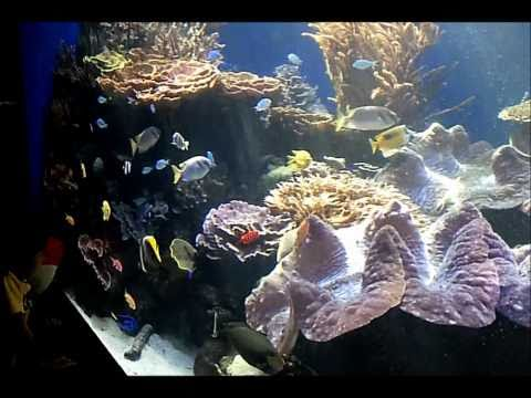 Waikiki Aquarium in Honolulu 12242010 (HD)