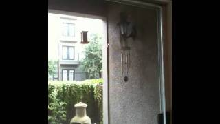 Squirrel climbs straight up a wall to jump a bird feeder