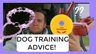 Why use a prong collar/Ecollar? Dog training advice with America's Canine Educator