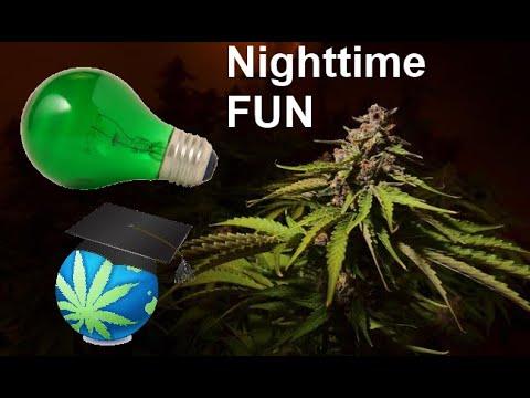 kann man uv lampen für cannabis verwenden