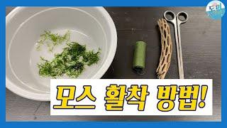 [수초키우기] 모스 수초 붙이기! (수초붙이기/구피/소…