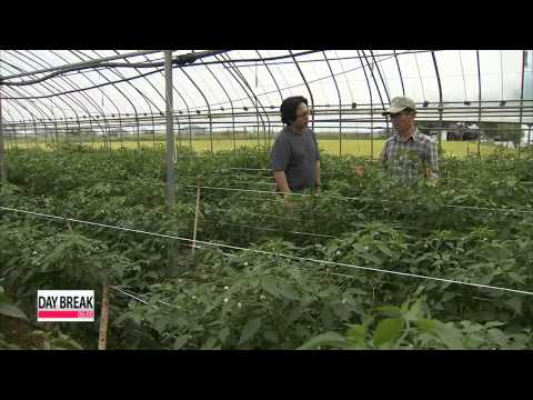 Korean organic farmers see fruitful results