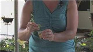 Rose Gardening : How to Root a Knock Out Rose