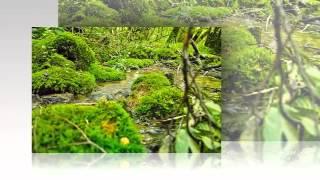 Bryophyta - fungi kingdom