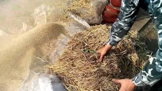 соломорезка 7.5 клв 600 1100 кг в час