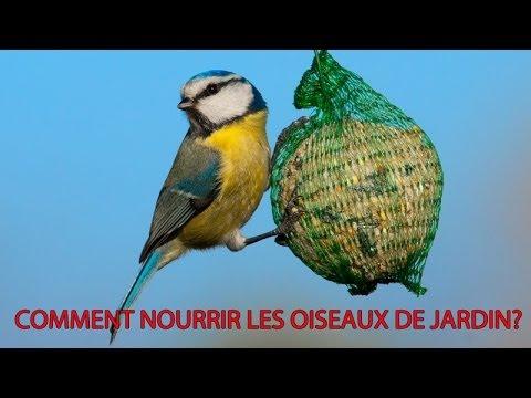 Oiseaux du jardin sachez les nourrir youtube for Brulots de jardin