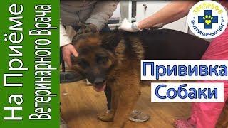 Прививка Собаки от Бешенства и Других Болезней