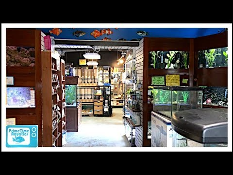 Fish Store Tour - Just Pets!