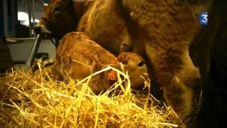 SIA 2014 : la vie de la ferme après la fermeture
