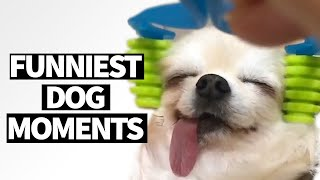 Hilarious Dog Viral Videos | Ultimate Dog Compilation 2019