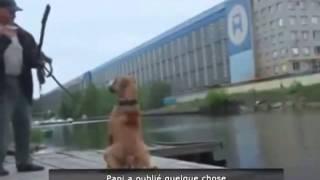 Видео Подборка Приколов с животными Кошки Собаки Смешные Животные 2015