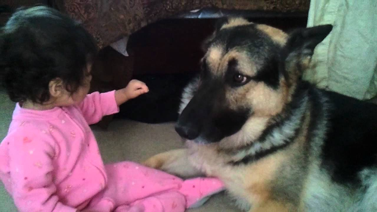 Daddy Dog Playing With Puppies