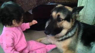 German Shepherd And Baby Playtime