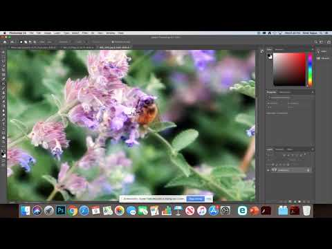 Photoshop Lab – Selections 2 – Bee Image