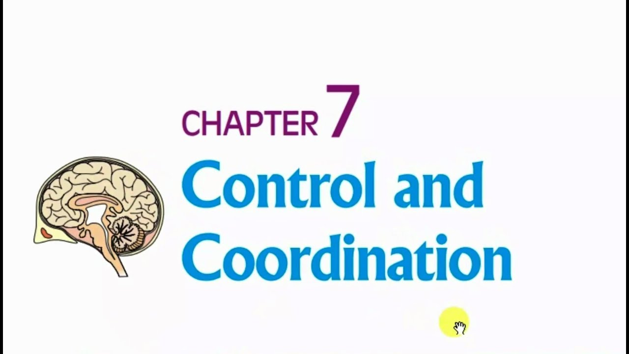 Bio ch 52 guide answers ebook array control and coordination class 10 science ch 7 part 1 youtube rh youtube com fandeluxe Choice Image