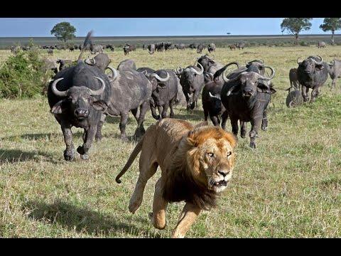 Гангстеры дикой природы