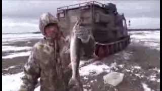 Певек.Рыбалка на спининг(мидл-лайт класс) Голец. Chukotka.Russia.Fishing