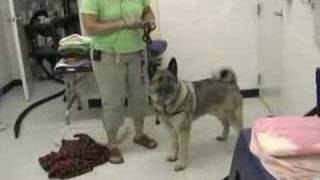 Bear Delaware Dog Training Elkton Maryland Newark Delaware