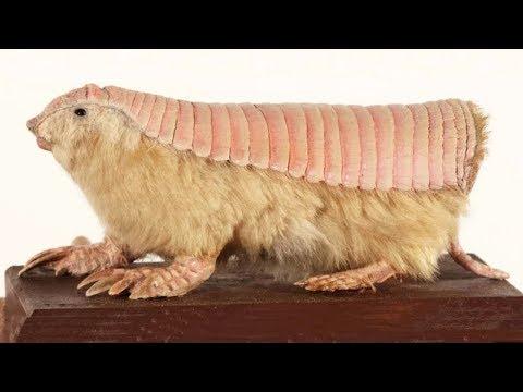 10 SCARIEST Animals You Won't Believe Exist!