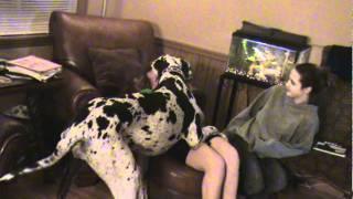 M2U00089.MPG Joanna's Big Dog \