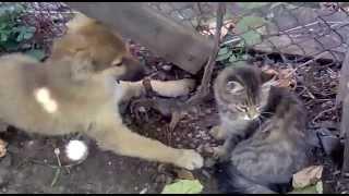 Кот покусал собаку
