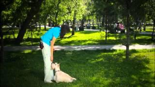 """Как научить собаку команде """"Ко мне"""". Дрессировка собак в Новосибирске. Кинологический центр """"БАРС"""""""