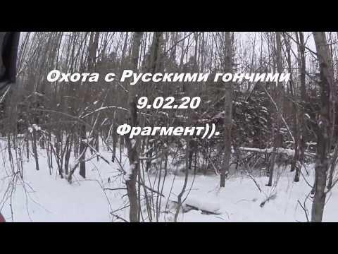 Охота с Русскими гончими на зайца  9 02 20