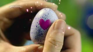 Video: Hatchimals CollEGGtibles 1 Pack Asst
