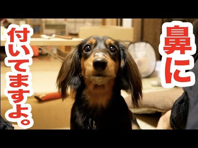 ヨーグルトが好きすぎる犬【可愛いすぎ】