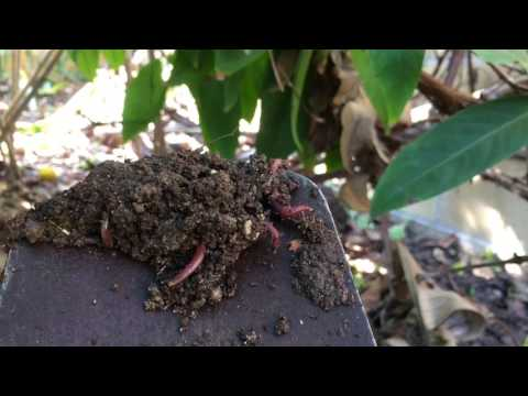 Making Compost & Worm Castings (Black Gold)