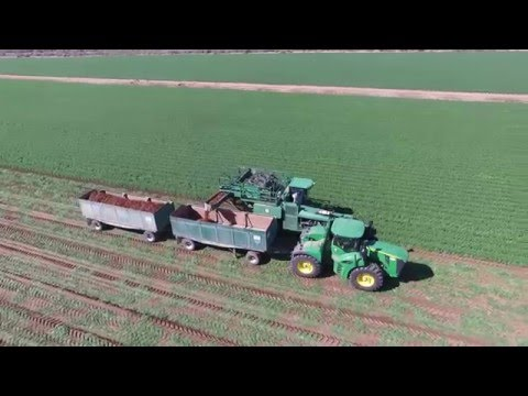 Grimmway Farms carrot harvest 2016