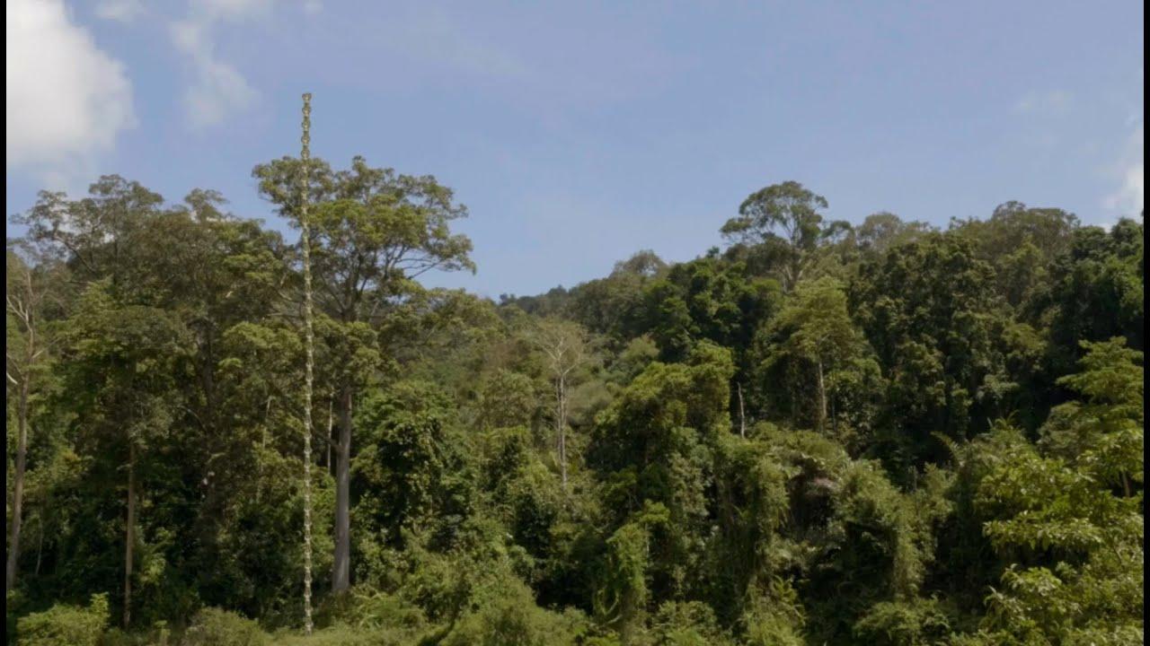 På opdagelse i den tropiske regnskov - del 1
