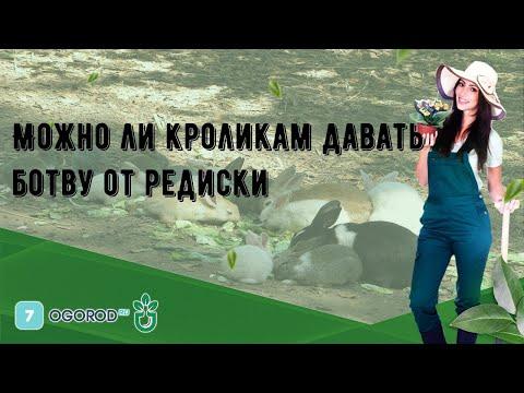 Можно ли кроликам давать ботву от редиски