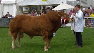 Pencampwriaeth Limousin | Limousin Championship