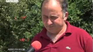 REPORTAJ VIDEO - Cresterea paunilor o afacere mica dar profitabila(, 2013-08-07T12:03:12.000Z)
