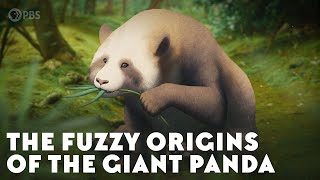 The Fuzzy Origins of the Giant Panda