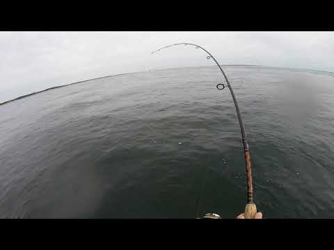 Fishing For False Ablacore In Long Island Sound 9-23-18